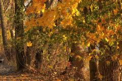Last Vestige Of Autumn 2
