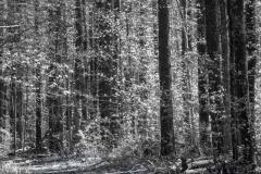 Coles Woods