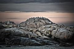 Seagull's Rock