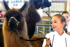 Llama Judging