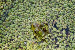 Wheres Froggo?