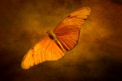 Mothra In Orange
