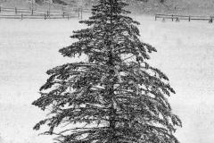 "A Wilderness Re""tree""t"