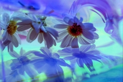 Blue Flower Reflections