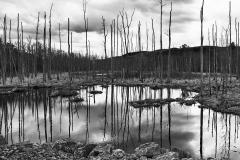 Black Creek Marsh