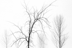 Winter Starkness