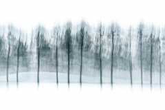 More Blurry Trees