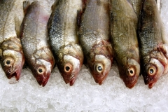 Looking Down On Fish