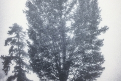 Tree And Mist