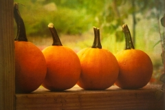 Its Pumpkin Time