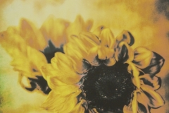 Distressed Sunflowers