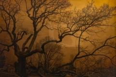 Old Granby Oak