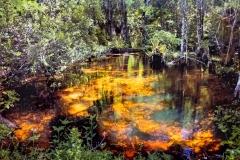 Everglades Pool