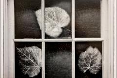 Leaf Triology