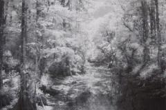 Big Cypress Preserve