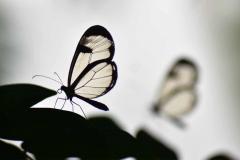 The Magic Wings