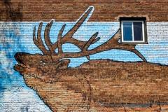 Albany Moose