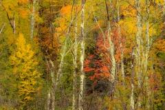 Adirondack Kaleidoscope