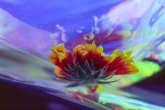Orange Flower Fantasy No 3