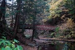 Woodland Trek