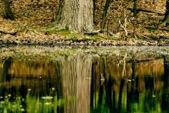 Peeble039s Pond