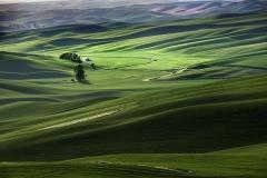 Lone Farm