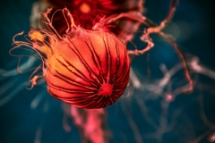 Yet Another Jelly Fish