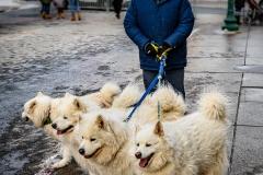 Quintuplet Dog Walker