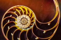 Spirals of Time