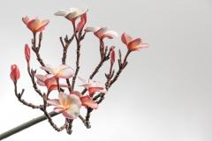 Kaua Blooms
