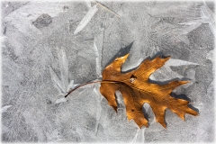 Leaf and Ice 5