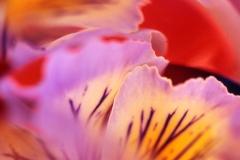 Flower Fantasy 1