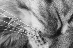 1115PRG0-General[Jess_Hohenstein]Whiskers