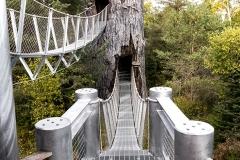 Adirondack Wild Walk
