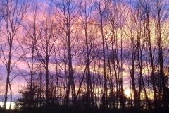 Backyard Winter Sunset