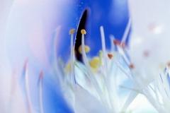 White Flower Fantasy