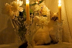 Jacob's Kitten