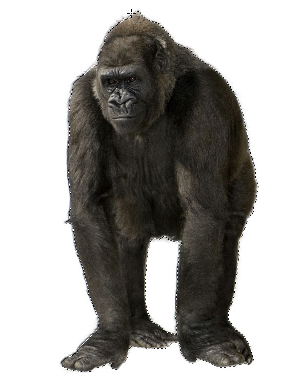cut out a gorrilla in photoshop