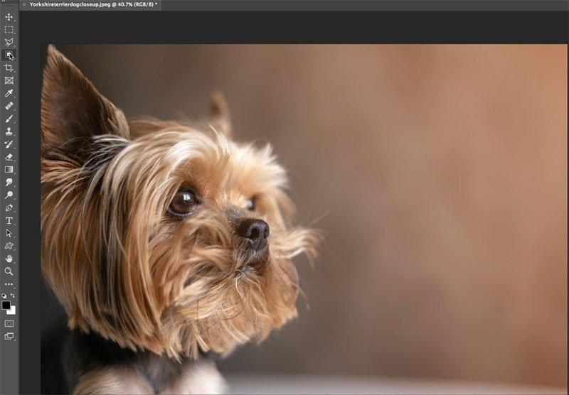 source image of dog